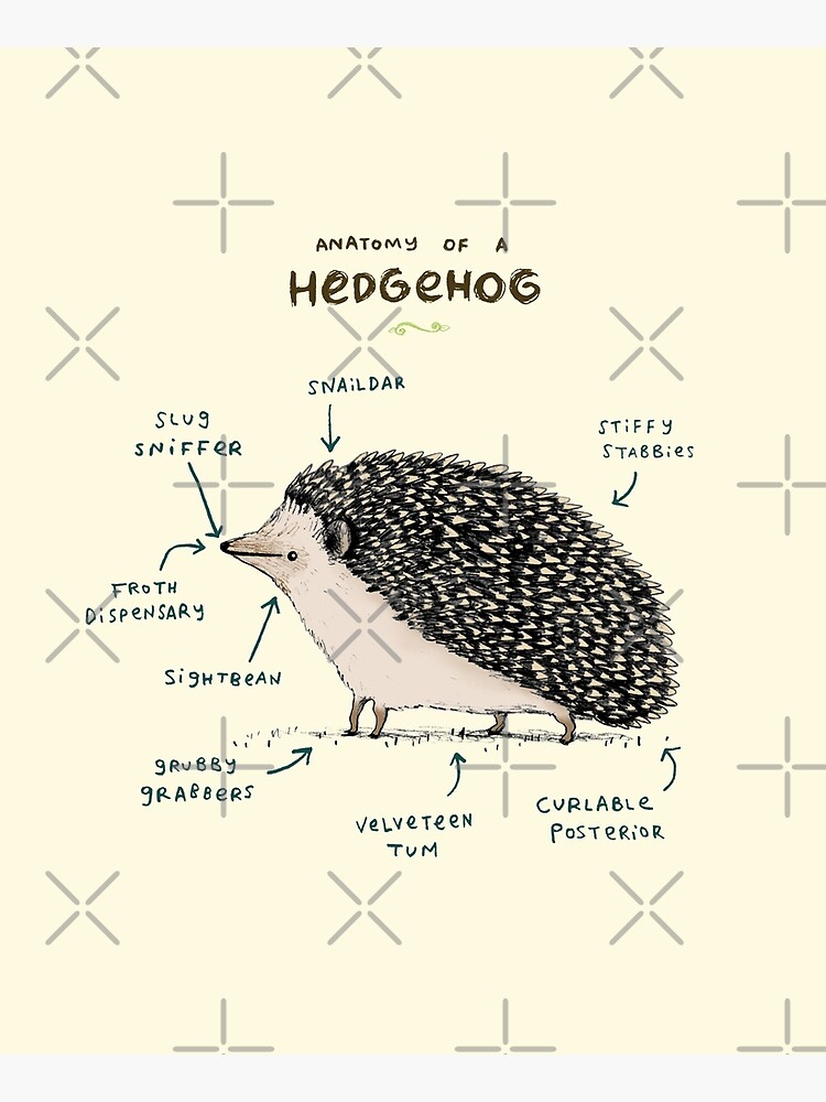 Anatomy of a Hedgehog by SophieCorrigan