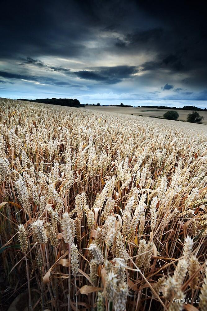 Harvest Whisper by Andy Freer