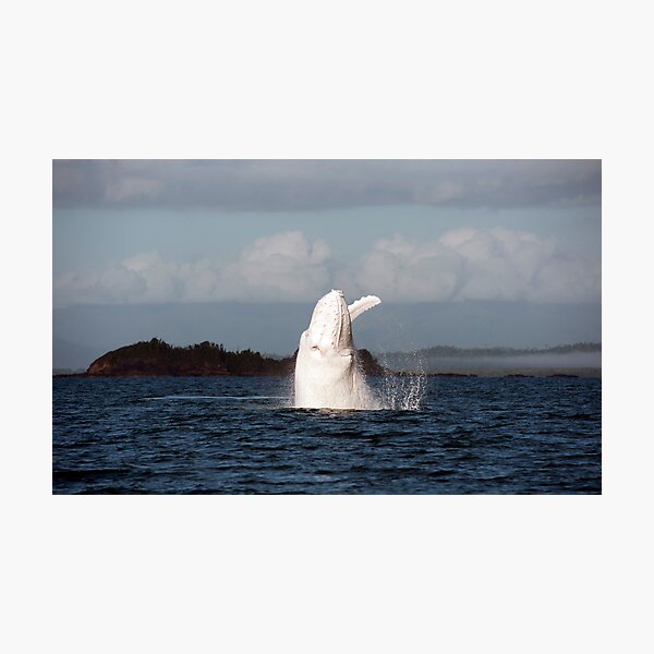 The Big White Whale Photographic Print