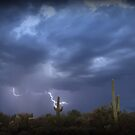 Striking Sonoran Desert by Kimberly Chadwick