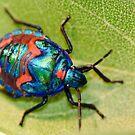 Christmas beetle by Emma M Birdsey