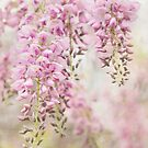 Pink Wisteria by Beth Mason