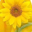 Yellow Sunshine by Beth Mason