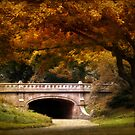 Autumn in the Park by Jessica Jenney