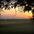 Horse Farm Morning II by John Carey