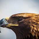 Eagle Eyed by Ruben D. Mascaro