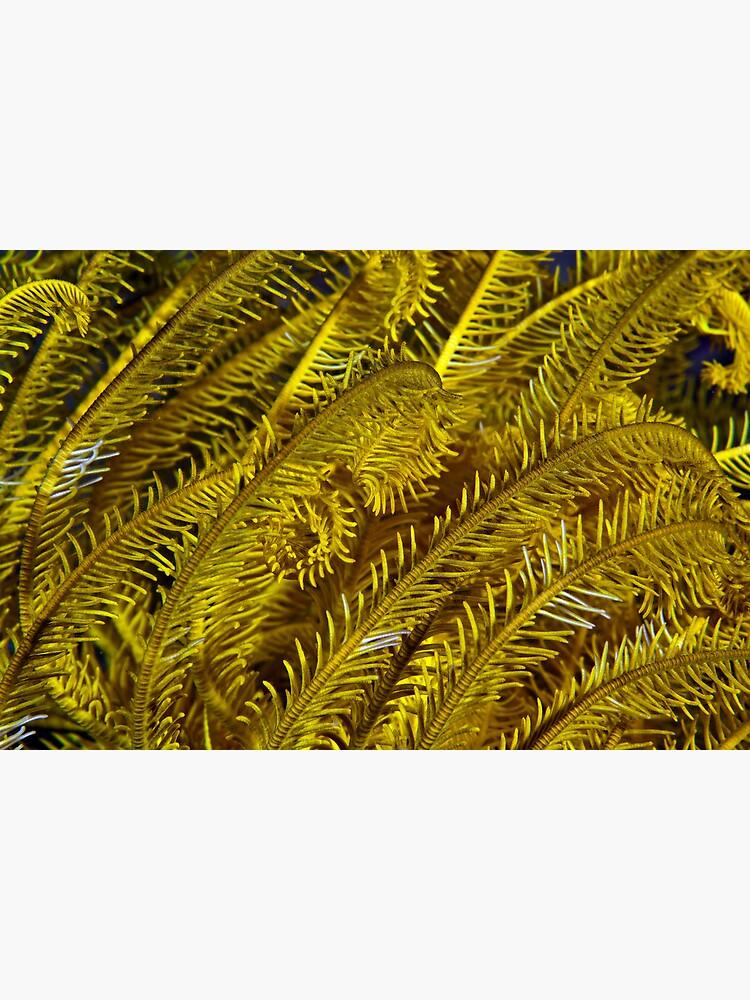 Yellow feathers by DavidWachenfeld