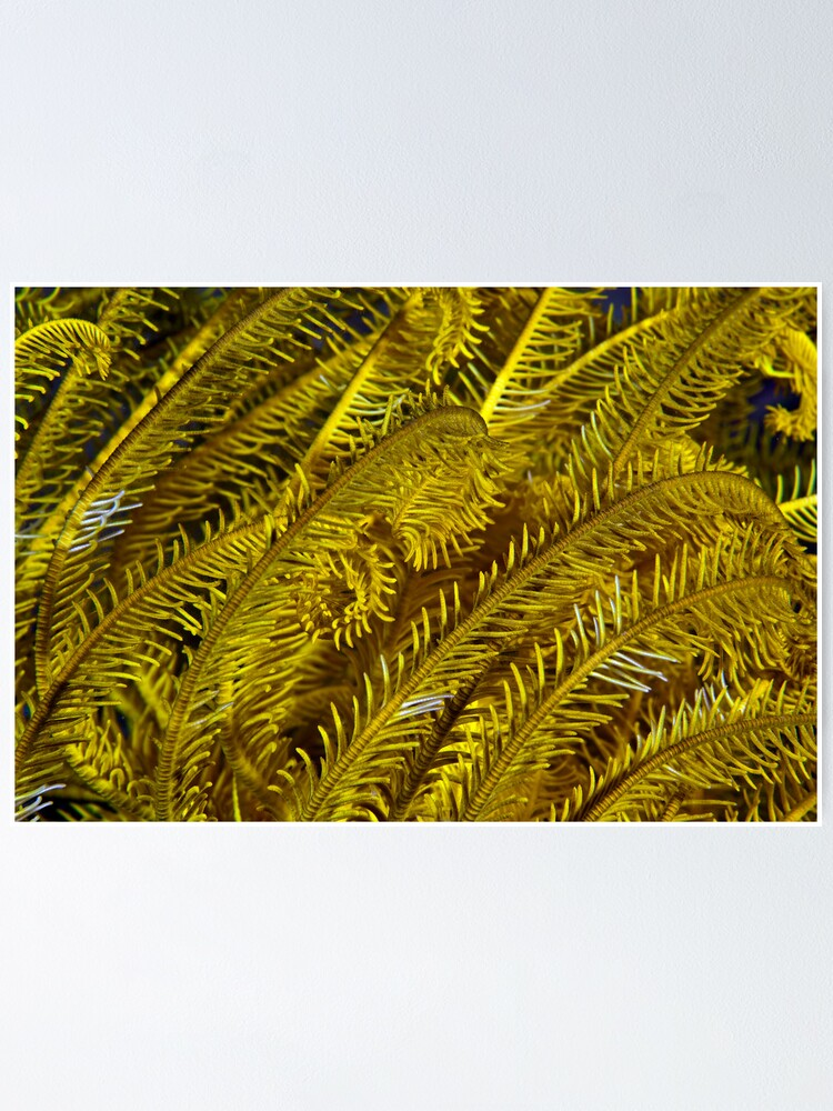 Alternate view of Yellow feathers Poster