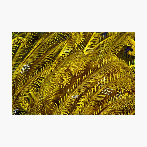 Yellow feathers Photographic Print
