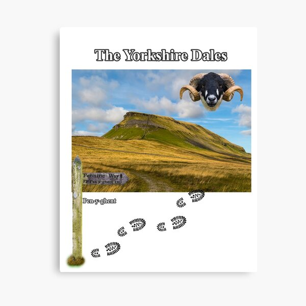 Pennine Way and Pen-y-ghent Canvas Print