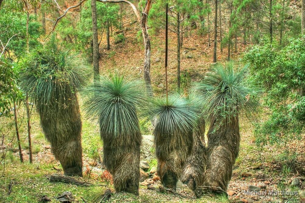 Grass Trees at Warrumbungle National Park by Michael Matthews