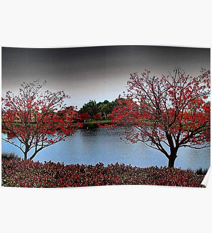 Erythrina Trees  Poster