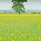 Tree and rape seed field by Stephen Knowles