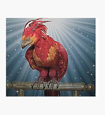 FAWKES  Photographic Print