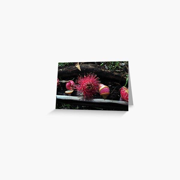 Euc. leucoxylon rosea - Candy Matthews Greeting Card