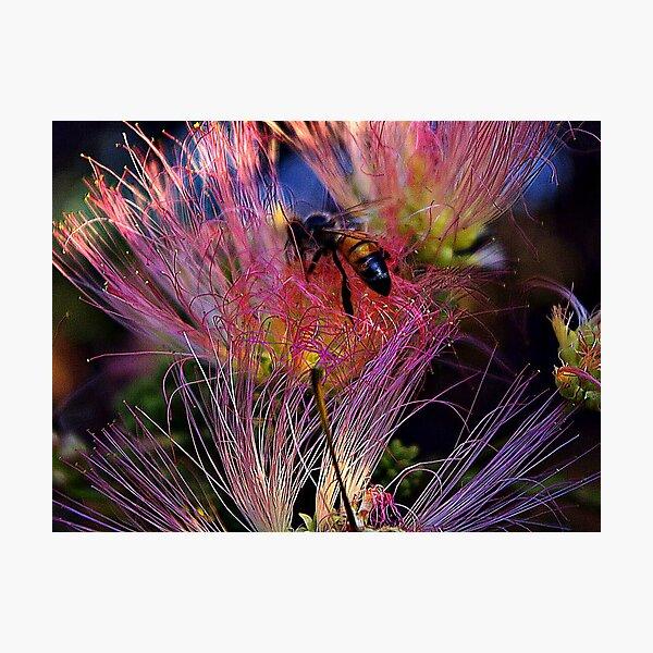 Fire Bee Photographic Print