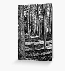 Woods Near The Pacific Greeting Card