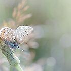 Sunbathing butterfly... (Blue version) by Bob Daalder
