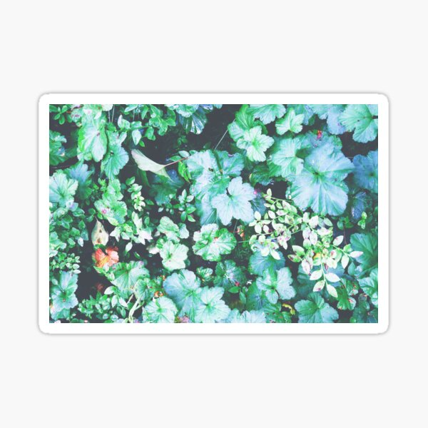 Forest plants green pattern  Sticker