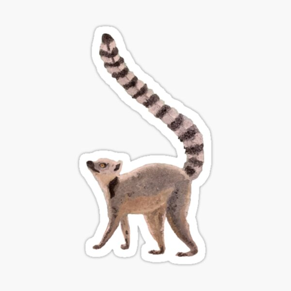 Ring-Tailed Lemur Sticker Sticker