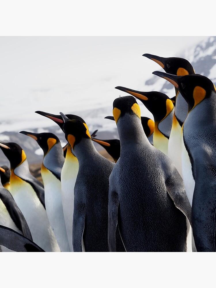 Pride Of Penguins by AntarcticShop