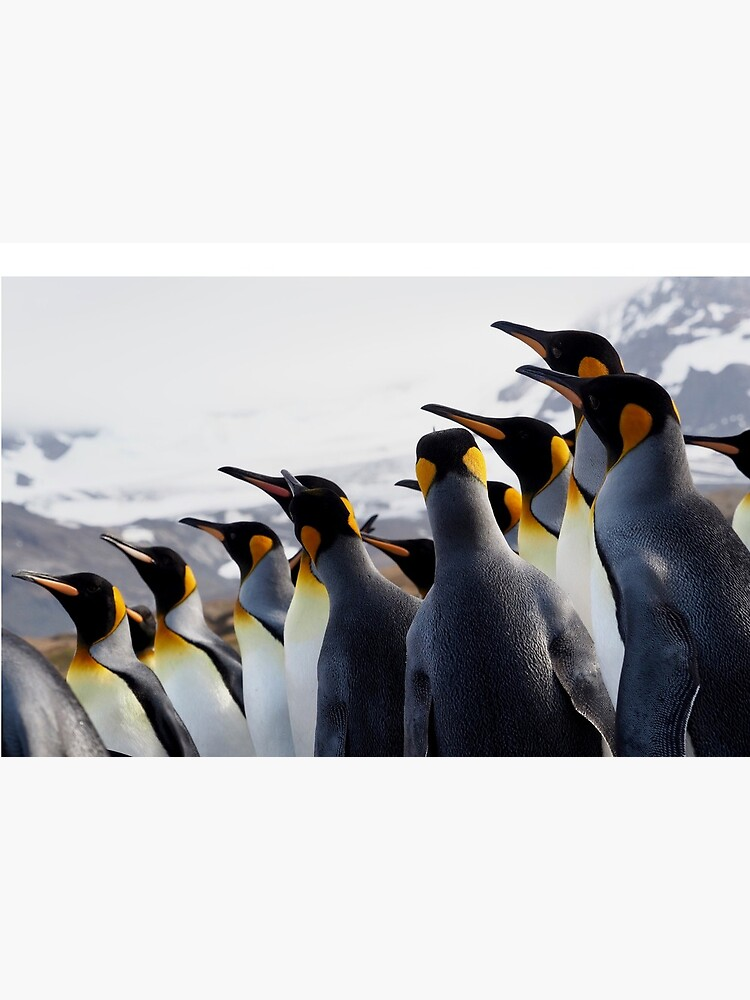 Pride Of Penguins by AntarcticShop