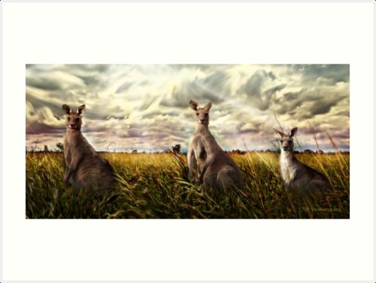 3 kangaroos by Cliff Vestergaard