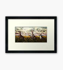 3 kangaroos Framed Print