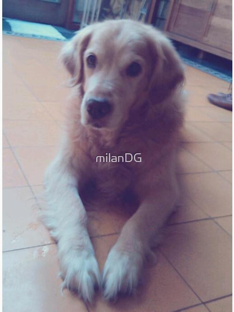 Doggy by milanDG