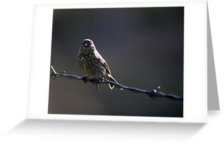 Bird On A Wire by Annie Underwood