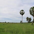 Rice Fields in Cambodia by NinaJoan