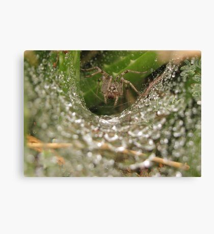 Funnel Wolf Spider & Droplets Canvas Print