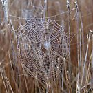Web of Intrigue by GandK