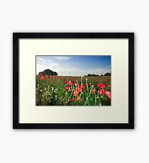 Summer Meadow Framed Print