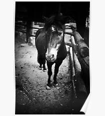 Sad Pony Poster