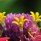 No hummingbirds by lumiwa