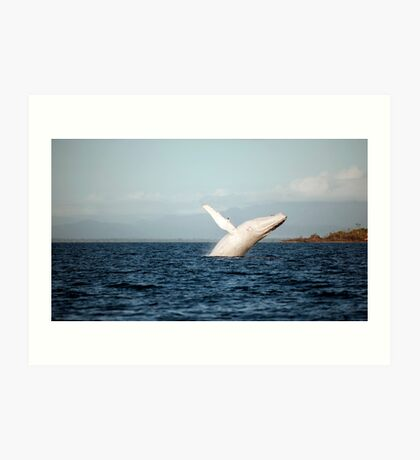 Show Off - Migaloo the white whale Art Print