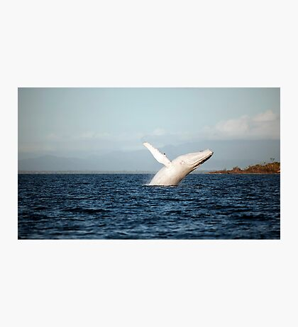 Show Off - Migaloo the white whale Photographic Print
