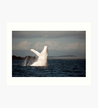 White Whale Wave - Migaloo Art Print