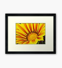 Red and Yellow Gazania  Framed Print
