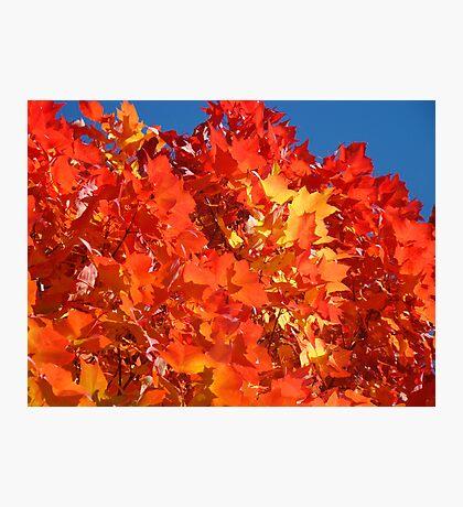 RED Nature Art Prints Orange Yellow Autumn Leaves Trees Photographic Print