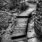 The Path by Michael  Herrfurth