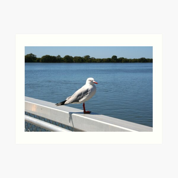 """Day 215   365 Day Creative Project  """"Solitary Seagull"""" Art Print"""