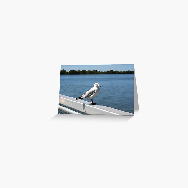 """Day 215   365 Day Creative Project  """"Solitary Seagull"""" Greeting Card"""