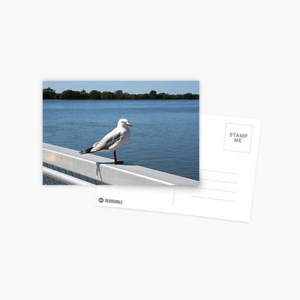 """Day 215   365 Day Creative Project  """"Solitary Seagull"""" Postcard"""