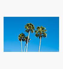 Palm Trees Photographic Print