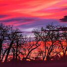 Cottonwood Morning Sawhill Tango by Gregory J Summers