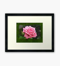 Pink Roses in Anzures 4 Blank P1F0 Framed Print