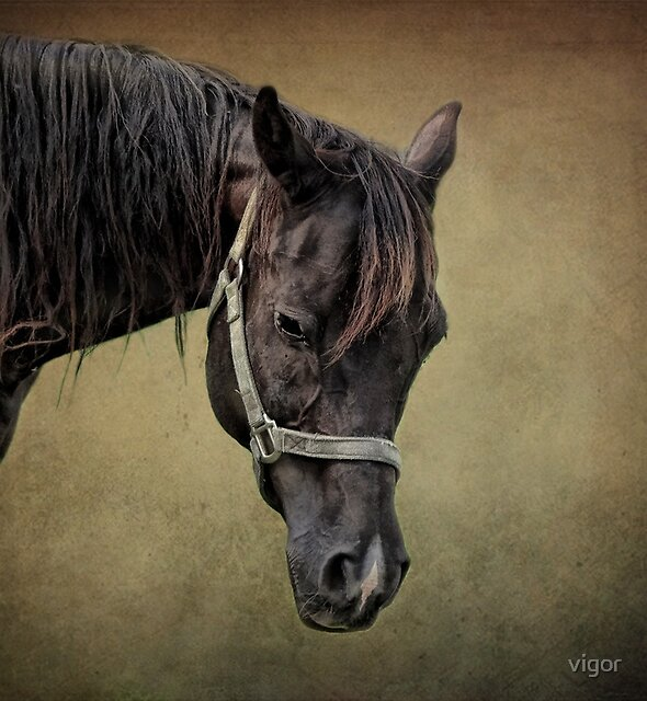 The Arabian by vigor