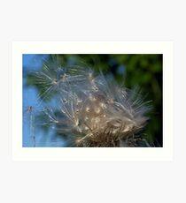 Thistle Seeds Art Print